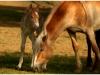 cavallini-1