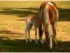 cavallini-2
