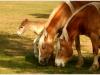 cavallini-3
