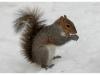 scoiattoli-1