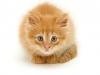 tender-cat-1