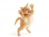tender-cat-4