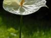 fiori-2