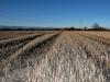 campi-di-grano6